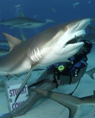 Picture of Stuart Cove Dive Bahamas